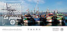 El manejo responsable de los recursos pesqueros contribuye al sustento de la pesca. SAGARPA SAGARPAMX #MéxicoSiembraÉxito