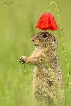 Photo Squirrels Hedgehogs Cute Creatures Beautiful Animals Scenery