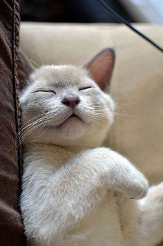 #cute #cats #funny #
