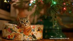 Mews: 2016 Christmas Guide for Catlovers and Owners! *Meow*