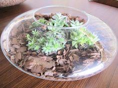 04-plantas-que-ficam-bem-em-uma-mesa-de-centro