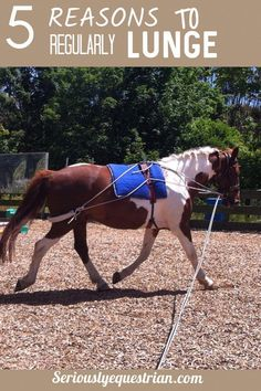 5 reasons to regularly lunge your horse – Seriously Equestrian - Art Of Equitation Horse Riding Tips, Horse Tips, Trail Riding, Horse Training, Training Tips, Training Exercises, Training Equipment, Workouts, Horse Exercises