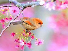 Lil bird