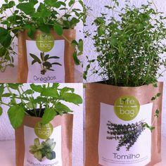 Grow bag oregãos, hortelã e tomilho Life in a bag