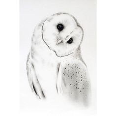 Charcoal Drawing ORIGINAL 11x14, Barn Owl Art, Owl Sketch, Barn Owl... ❤ liked on Polyvore featuring home, home decor, wall art, barn owl drawing, owl home decor, owls drawing, paper wall art and graphite drawing