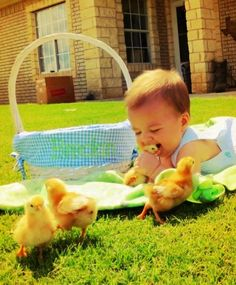 run for your lives little chicks!