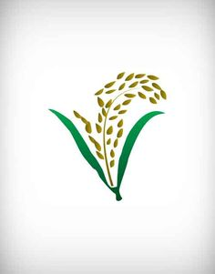 paddy, food, ear, flour, dry, raw, rice, vector, field, grain, cereal, green, spica, husk, label, corn, design, plant, harvest, isolated, decoration, ripe, natural, agriculture, white, fertility, barley, sign, leaf, symbol, agronomy, decor, spike, asia, vegetable, illustration, flora, stem, decorative, seed, gold, growth, art, golden, background, fresh, bread, nature