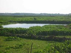 Rawa (swamp/marsh) merupakan daerah bertanah basah yang selalu digenangi air secara alami karena sistem drainase (pelepasan air) yang jelek atau letaknya lebih rendah dari daerah sekelilingnya.