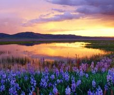 sunset mountains clouds landscapes flowers meadow swamp HD Wallpaper