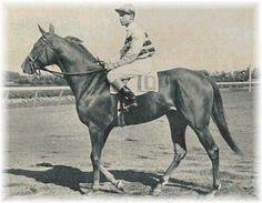 Busher was the 1945 Horse of the Year and daughter of 1937 Horse of the Year, War Admiral. #horseracing #history #DarkHorseBet