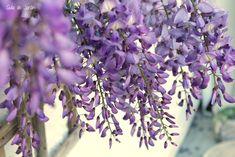 10 plantas trepadoras para climas fríos - Guia de jardin. Aprende a cuidar tu jardín.