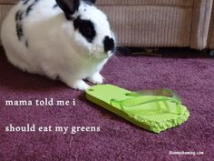 Bunny Shaming: Eat your greens