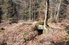 Arboles tipicos del bosque de Seelow alemania - Buscar con Google