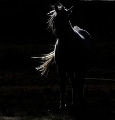 espiritu libre by Equuskath on DeviantArt