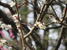 https://flic.kr/p/DCMJYo | Welcome the return of spring