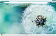 Macro Dandelion Google Chrome Theme