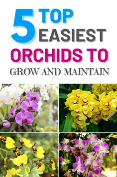 Here is our list of top 5easiest orchids to grow. Even with being very easy to grow and maintain, none of these 5 orchids lack in beauty or wow factor. Therefore, it is just no excuse for you not to try to grow by yourself. #howtogroworchidplants #growingorchidsindoors #howtogroworchidsinwater #orchidscareforbeginnershowtogrow #caringfororchidstips Indoor Gardening, Container Gardening, Gardening Tips, Outdoor Gardens, Vegetable Garden For Beginners, Gardening For Beginners, Vegetable Gardening, Growing Orchids, Growing Flowers