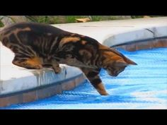 Cute and Funny Cats :-) First Cat Fail Compilation 2013