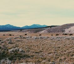 Yellowstone National Park / USA   http://msemenems.vsco.co/grid/1