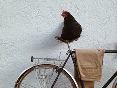 Nathanstracke | VSCO Grid  #Levis #Commuter #Chicken #VSCOcam #Cycling