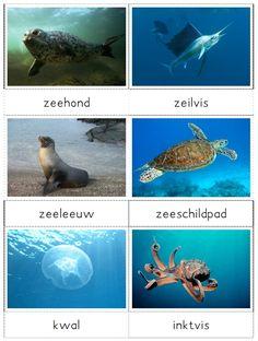 legwerkje zeedieren - MontessoriNet Montessori, Ocean Life, Arctic, School, Fish, Education, World, Projects, Octopus