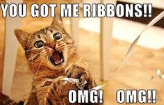 this is totally my cat! i dont put ribbons and bows on christmas gifts till christmas eve night! lol