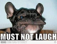 Me trying not to laugh at an inappropriate moment.