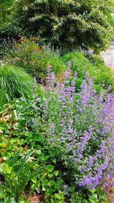 Plantings on a slope. Use drought tolerant, colorful plants. See more ideas.