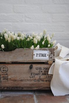 White hyacinth and crates