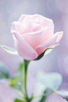 Pastel light rose.