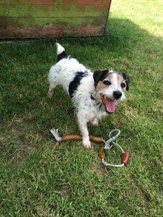 Taffy Dogs, Pet Dogs, Doggies