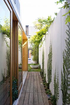 Planting For Side Yards With Narrow Timber Deck And Concrete Wall Climbing Plants Also Hardwood Frame Sliding Glass Door And Vines On Wall Design Ideas: Modern Minimalist Interiors, Bondi House by Fearns Studio Seiten Yards, Outdoor Spaces, Outdoor Living, Outdoor Fire, Landscape Design, Garden Design, Path Design, Ficus Pumila, Narrow Garden