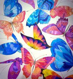 Millie Marrota - butterflies