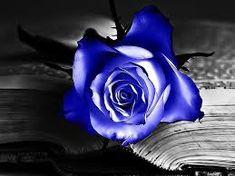 Resultado de imagen de rosa azul imagen Flores Azules 11165e3e057
