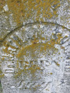 Moss and lichen covered tombstone