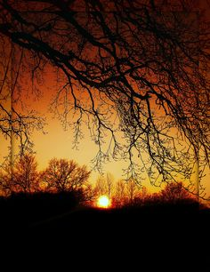 Sunset on roots. Nature Pictures, Cool Pictures, Beautiful Pictures, Amazing Photography, Landscape Photography, Nature Photography, Beautiful World, Beautiful Places, Forest Sunset