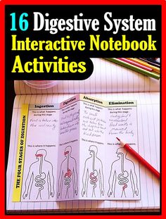 Gr.7-12. Sixteen Digestive system foldable activities will help your students love learning about anatomy.  Great for providing hands on learning for students of various levels.