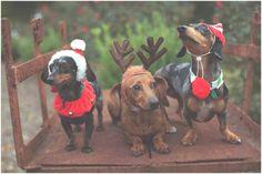 A NEWLY-WED CHRISTMAS // KAYLEE & BOBBY | haleyshef