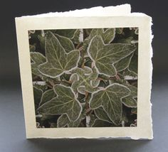 Unique greetings card design for birthdays, Christmas and New Year. Card without a specific written message. This beautiful photograph frosted ivy by photographer Jonathan Leach is mounted on handmade Indian paper and comes complete with a handmade paper envelope. All profits from this card sale goes to support the charity lepra.  Price £3.50 P&P included.