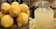 DIY Probiotic Lemonade: Strengthens the Immunity & Boosts Gut Health Cookbook Recipes, Cooking Recipes, Healthy Recipes, Healthy Foods, Healthy Life, Healthy Eating, Smoothie Drinks, Healthy Smoothies, Fibromyalgia Diet