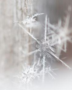 Winter's Gems by Carla Dyck - Snowflakes fallen on Winnipeg, Canada