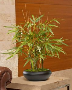 Silk Bamboo Bonsai Tree | Realistic Artificial Bamboo Trees Online