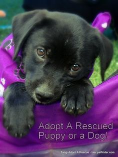 Adopt A Shelter/Rescue Dog <3