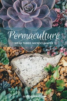 Permaculture microclimates and their benefits in design