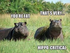 funny hippos