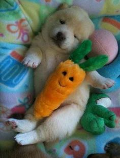 This little puppy cuddled with his carrot from the market: