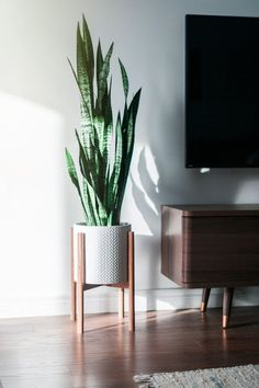 Mid century modern plant stand, Inspired by the this beautiful mid century style plant stand is the perfect decor piece for any room. Mid century modern plant stand, Inspired by the this beautiful mid cent. Modern Plant Stand, Wood Plant Stand, West Elm Plant Stand, Decoration Plante, Mid Century Modern Decor, Midcentury Modern Living Room, Modern Living Room Decor, Bedroom Modern, Tv Stand Ideas For Living Room