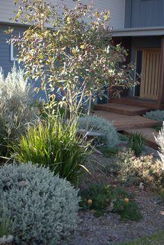 Portfolio: Garden Design Bulli – Mallee Design Source by gerhardkammerin Australian Garden Design, Australian Native Garden, Modern Garden Design, Contemporary Garden, Australian Plants, Patio Design, Bush Garden, Potager Garden, Diy Garden