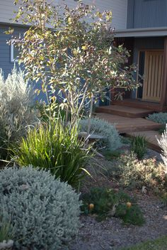 Portfolio: Garden Design Bulli - Mallee Design