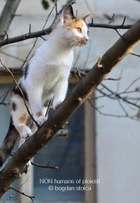 NON-humans of Ploiesti - Ea e Dalia Dali, Animals, Animales, Animaux, Animal, Animais, Dieren